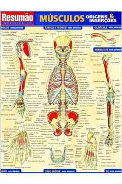 Musculos: Origens e Insercões - Vol.15 - Colecão Resumão
